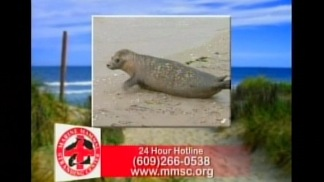 Save the Seals PSA