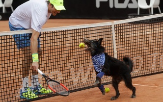 Who's a Good Dog? The Tennis Ball Retrievers at Brazil Open