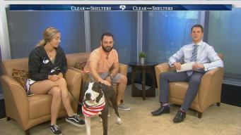 Clear the Shelters Success Story: Meet Dawkins
