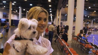 Ashley Roberts: Best In Show