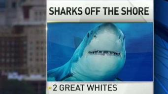 2 Sharks Surface Near Jersey Shore and Delaware