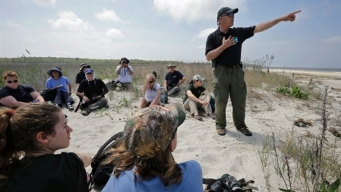 Program Saves Shorebirds After Sandy