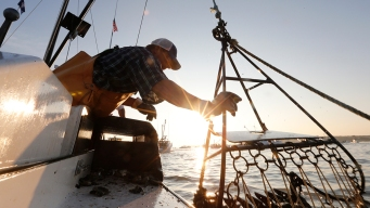 Chesapeake Bay Improving But Huge Challenges Remain: Report