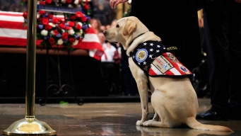 Service Dogs and Our Veterans