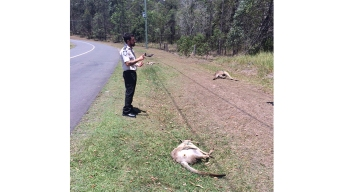 Australian Driver Deliberately Kills 17 Kangaroos: Group