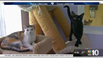 Adopt From Smaller Shelters Like the Kitty Cottage