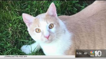 Animal Shelter Euthanizes Man's Pet Cat