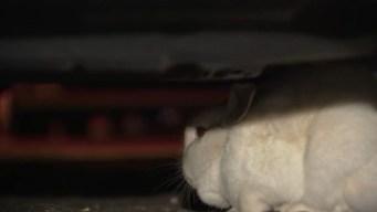 Hopping Horror: 2 Rabbits Wreak Havoc on Philly Neighborhood