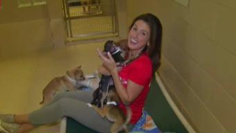 Jessica Boyington Is Not Up for Adoption, These Dogs Are