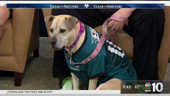 Clear The Shelters: Meet Peaches the Rescue