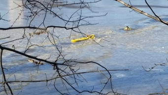 Watch: Crews Rescue Dog Trapped in River During Brutal Cold