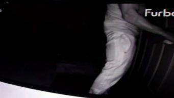 Dog Camera Catches Burglar