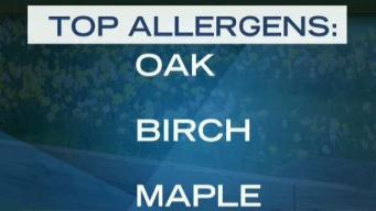 High Pollen Count Forecast