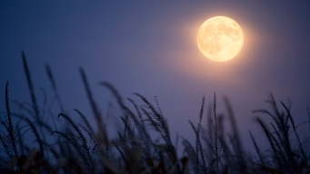 Rare Full Harvest 'Micromoon' Will Emerge This Weekend