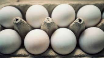 Norwegian Team Gets 15K Eggs After Google Translate Error