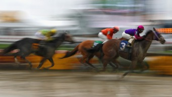 2 Horses Die in First 4 Races on Preakness Day