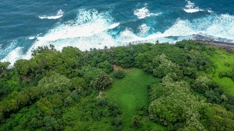 Sacred Hawaiian Tree Species Threatened by Deadly Fungus; Tourists Can Help Save It