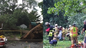 Firefighters Rescue Trapped Woman After Tree Falls on Car