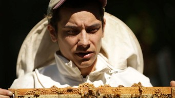 Philadelphia-Area Millennials are Buzzing About Beekeeping