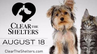 NBC10 Clear the Shelters: Fostering a Pet Could Be an Option
