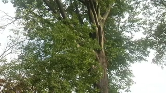 Man Jailed for Cutting Sappy Tree: Police