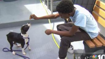 Homeless Teens Help Animals Find a Home