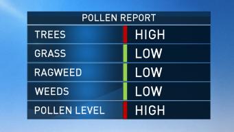 Sneeze-Worthy! Tree, Pollen Allergies at High Levels