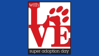 Super Adoption Day