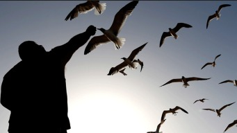 Jersey Shore Town Issues Zero Seagull Feeding Tickets