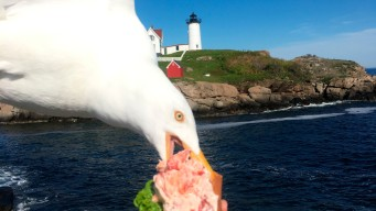 Seagull Photobombs, Steals California Woman's Lobster Roll