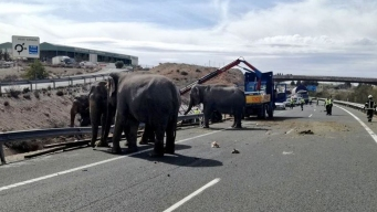 Spanish Circus Truck Tips Over, Kills 1 Elephant, Injures 4