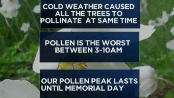 The Extended Winter Making Its Impact on Allergy Season