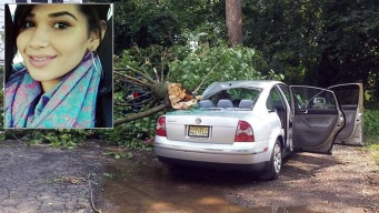 Woman Killed by Falling Tree While Walking to Car
