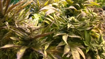 Pa. Town Looks to Decriminalize Marijuana