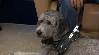 NBC10 @Issue: Service Dog Helps Detect Headaches
