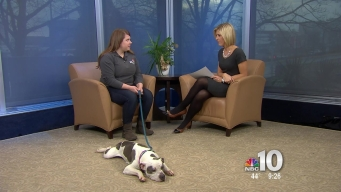 Clear the Shelters: Adopt a New Friend