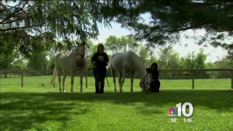 Jon Stewart Adopts Abused Horse From Chester County