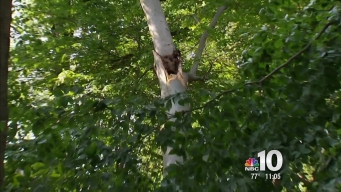 Tree Branch Falls on Father and Son at Neshaminy State Park