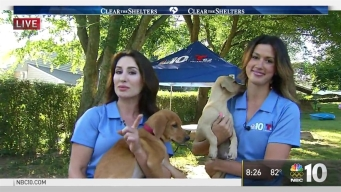 Clear The Shelters: Sheena Parveen, Jessica Boyington Introduce Us to Adoptable Dogs
