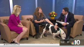 ACCT Philly Stops by for National Pitbull Awareness Month