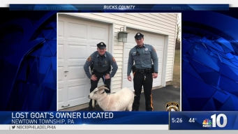 Police Find Lost Bucks County Goat