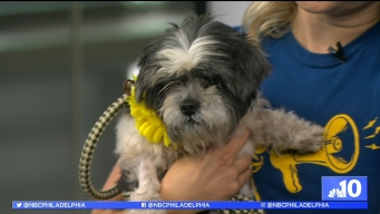 Clear the Shelters: Dine Out for Pet's Sake