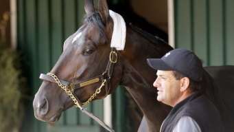 Pharoah Horse Assistant Vying for Triple Crown