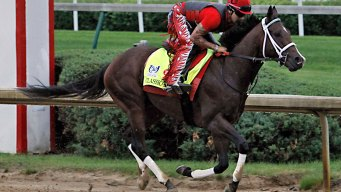 Likely Favorite Classic Empire to Miss Belmont With Abscess