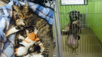 10 Shelter Stories That Will Make You Smile