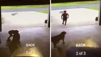 Young Trespasser Caught Hugging Neighbor's Dog