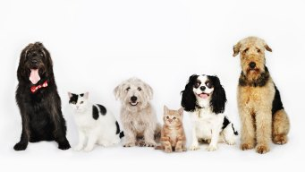 Save the Date: Help Clear the Shelters on August 18
