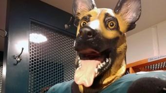 The Story Behind Eagles' Dog Masks