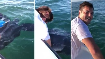Fishermen Save Leatherback Turtle Tangled in Buoy