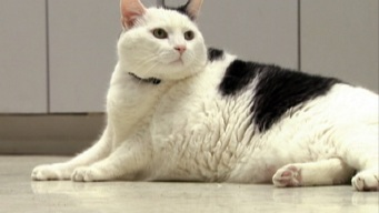 Otto the Fat Cat's Weight Loss Success